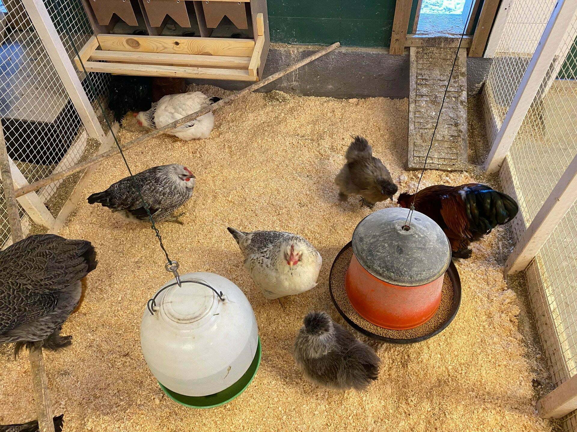 Hønene